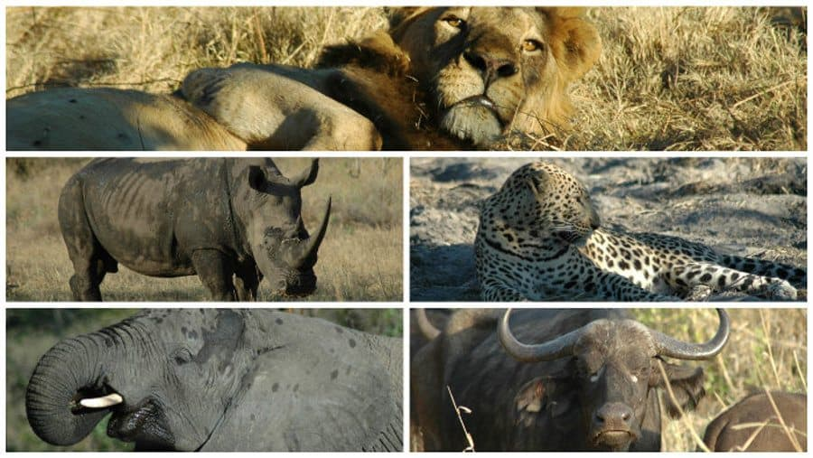 All you have to know about the Big 5