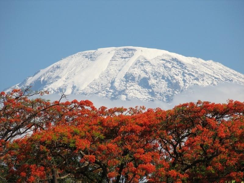 Snows of kilimanjaro literary analysis essay
