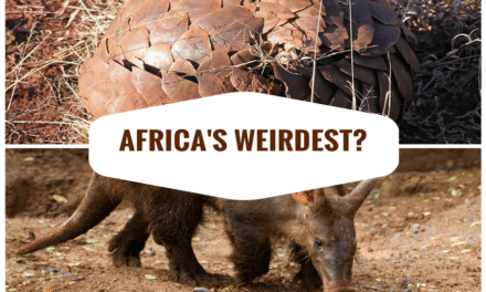 Top 5 of Africa's weirdest creatures