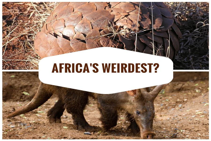 Top 12 Weird Animals in Africa - Mind-Blowing & Bizarre