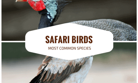 Birds on safari: 10 incredible birds and where you can see them