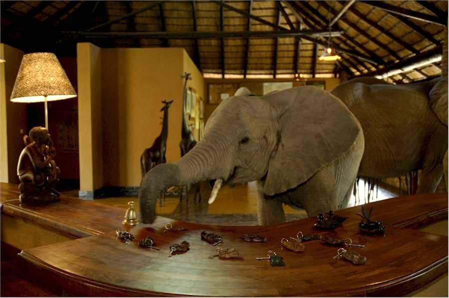 Check-in with elephants at Mfuwe Lodge