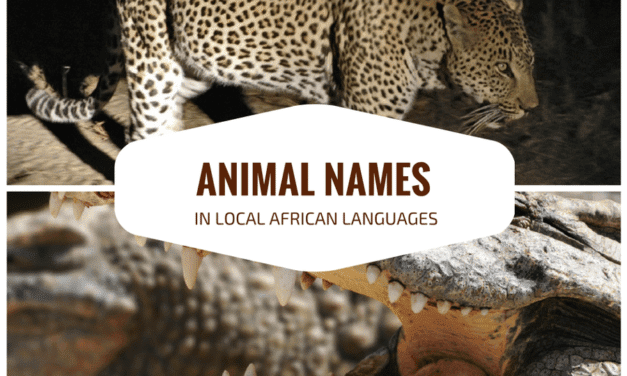 Common animal names in local African languages