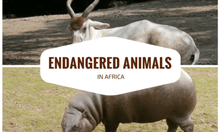 Top 10 most endangered animal species in Africa