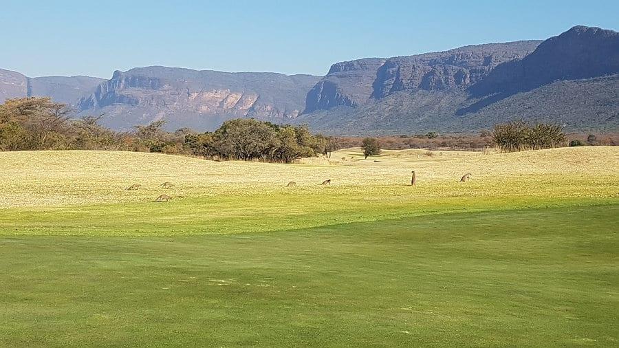 15 of the best golf courses in Africa (for wildlife enthusiasts)