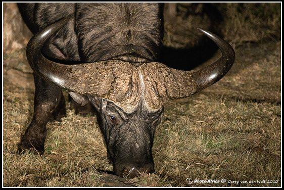 Wildlife Photography - Gerry van der Walt