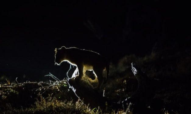 Night time safari drives: 5 reasons to embark on a twilight journey