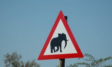 "Funny and unusual ""signs"" of the wild"
