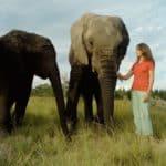 Anna-Elephant-02