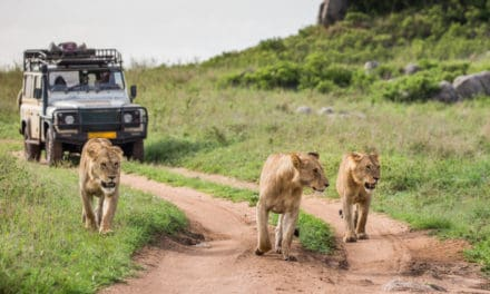Safari booking, 4 essential steps