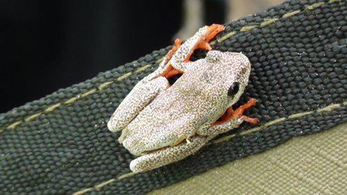 monster-frog
