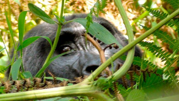 Bwindi from A to Z: My gorilla safari experience