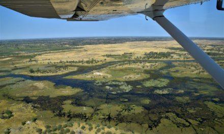 Bird's eyeview of the Okavango