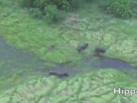 Scenic-flight-hippos