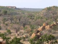 The Valley of the Baobabs, seen from the top of Mapungubwe Hill.