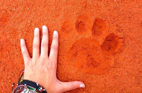 Raabia Hawa's love affair with wildlife