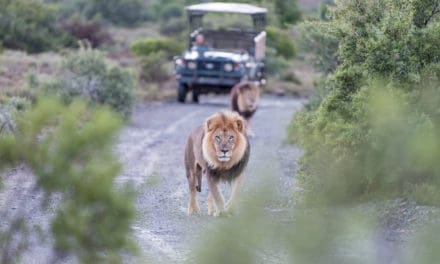 The history of the South African safari