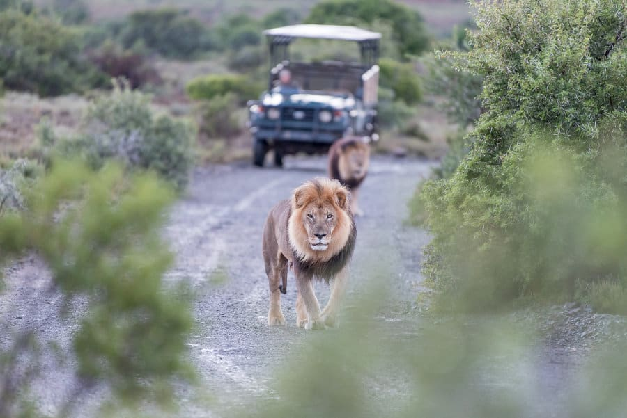 Discover the history of African safari before your next adventure
