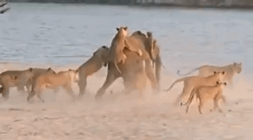 Most spectacular African Wildlife videos