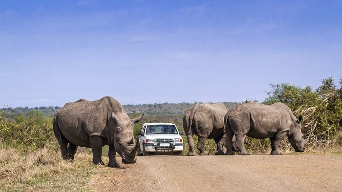 """10 """"lekker"""" ways to go on safari like a South African"""