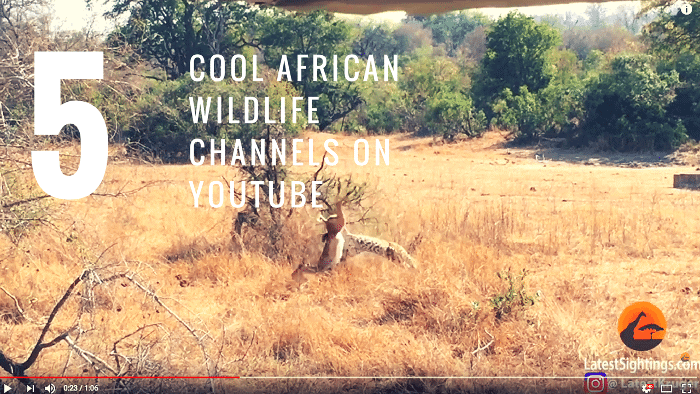 Top 5 African wildlife channels on YouTube