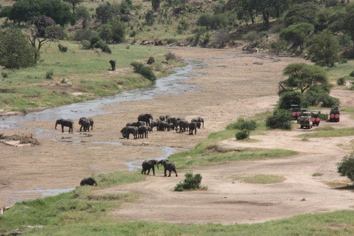 Tourists observe elephants in the dry river bed