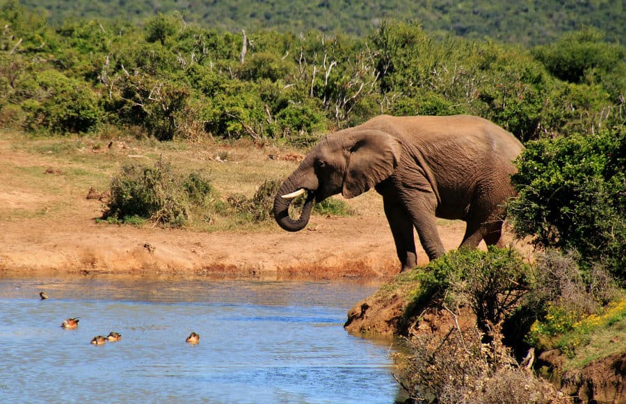 How to: learn common animal names in Swahili