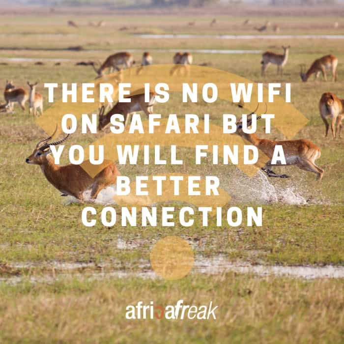 Africa Freak quote about safari and wifi connection