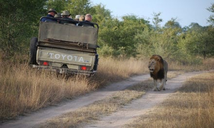 Ultimate guide to planning your first safari in Africa