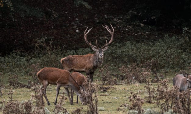 Everything you need to know about African deer