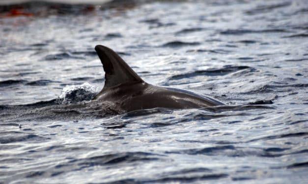 How to swim with dolphins in Kizimkazi