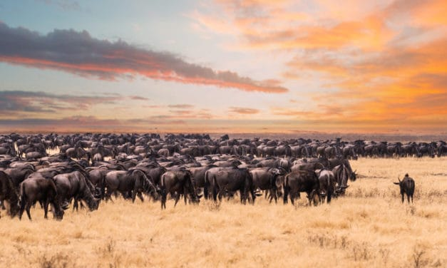 The great wildebeest migration – Where, when and planning a safari