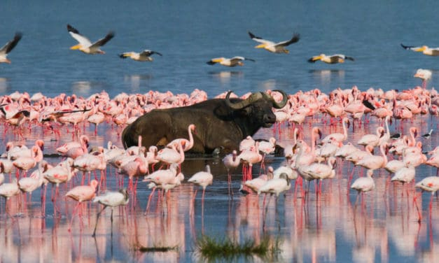 Kenya safari: the planning guide for first-time visitors