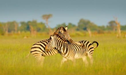 Botswana Safari: The planning guide for beginners
