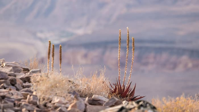 Pretty vegetation on the verge of Fish River Canyon