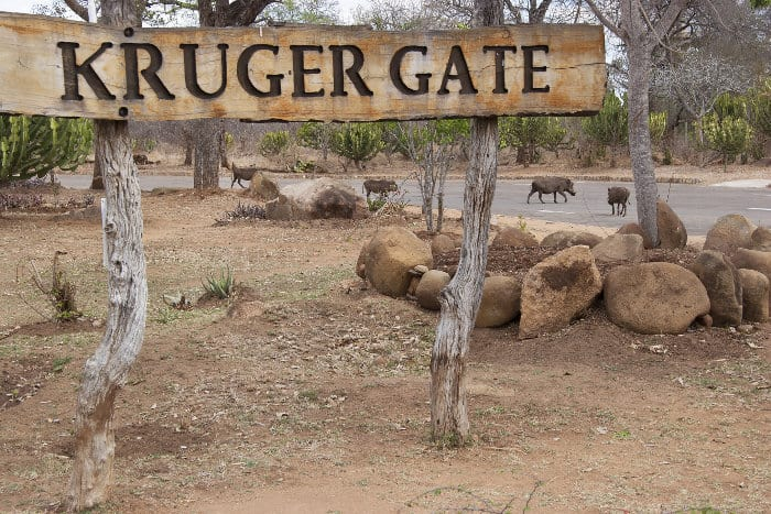 Kruger gate sign with warthogs in the background