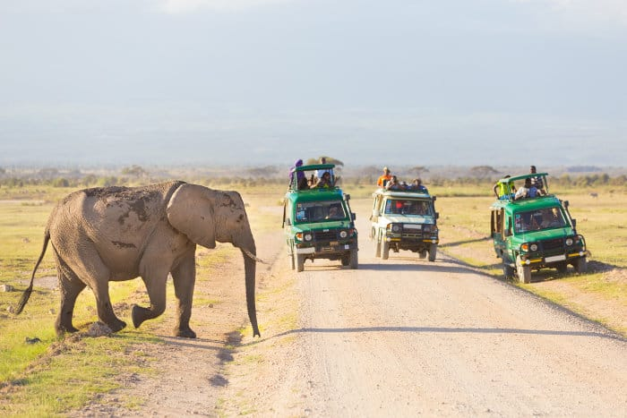 Elephant crosses the road in front of tourists in Amboseli National Park