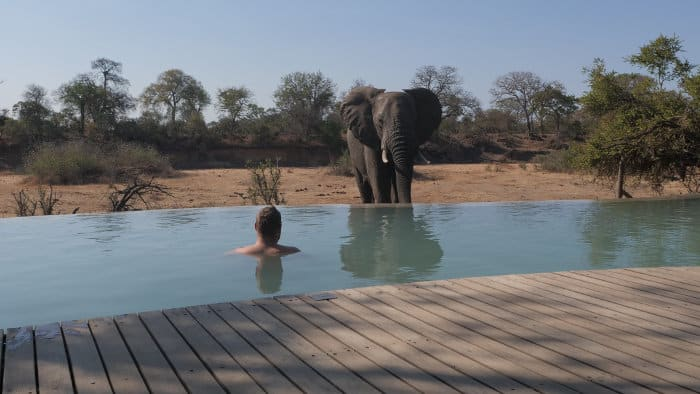 Elephant drinking at the Ngala Tented Camp pool in Timbavati