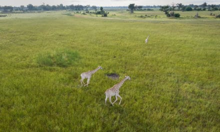 Okavango Delta – The safari guide to Africa's great oasis