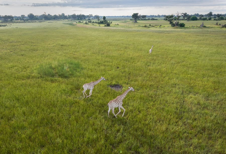 Okavango Delta – The safari guide to Africa's great oasis