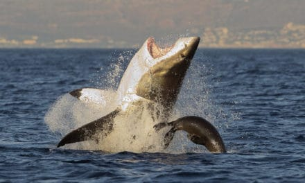 Gansbaai: Visitors guide plus shark cage diving lowdown