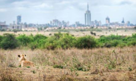 Nairobi National Park – Africa's most surprising safari experience