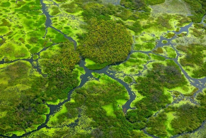 Lush islands in the Okavango