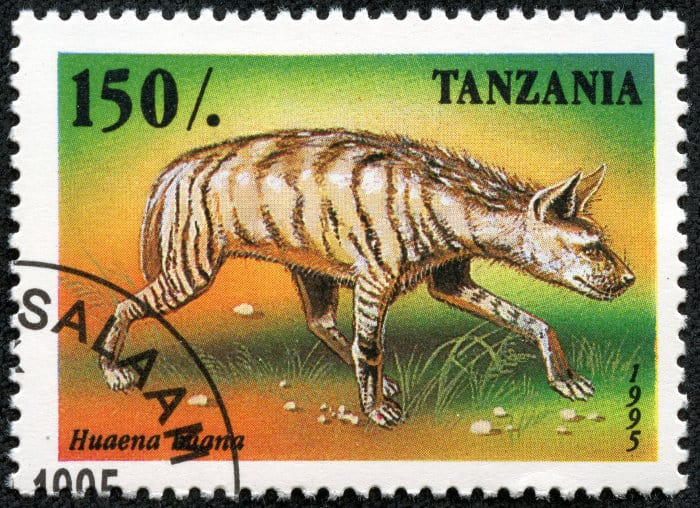 Striped hyena on a colourful Tanzanian stamp (circa 1995)