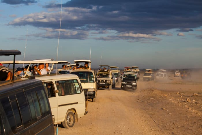 Traffic jam in Amboseli as tourists watch a lion family