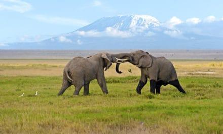 Amboseli National Park – Discover more than elephants