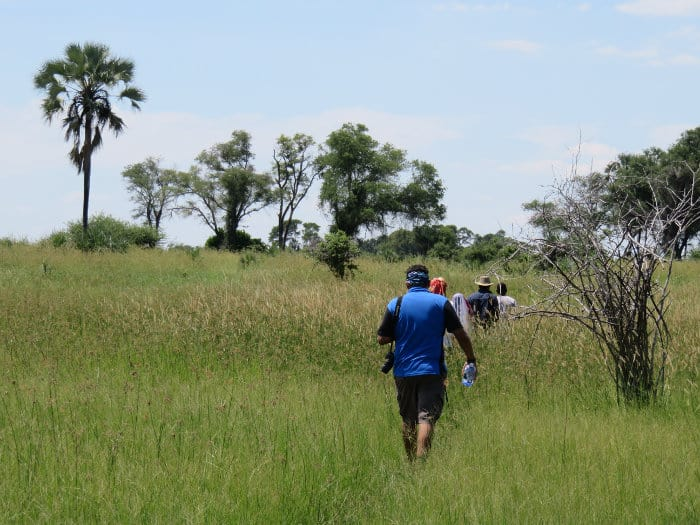 Walking through the bush in the Okavango