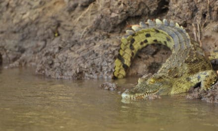 Katavi National Park: Tanzania's best kept secret