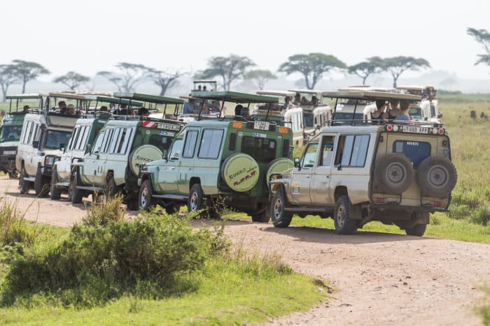 Watching animals in the Serengeti causes a traffic jam