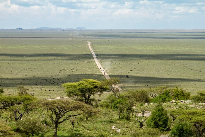 Endless plains of the Serengeti seen from a hill